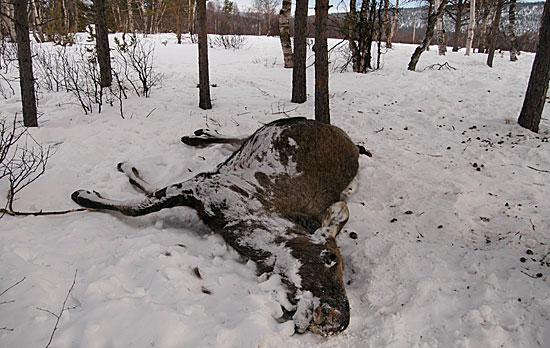 Skogens dronning fikk antakelig en smertefull utgang fra livet.