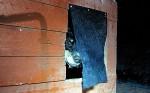 Fia titter ut men synes det er lite fristende å forlate den lune varmen innafor ullteppet foran døråpninga.