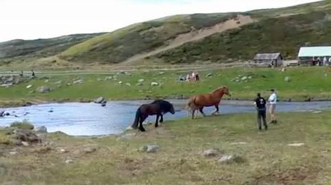 Hesteslepp ved Bekkelegeret i Einunndalen sommeren 2009