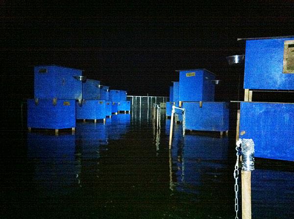 Blåmalte hundehus ble stablet i høyden etter at hundene var evakuert fra hundegården.