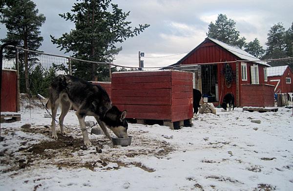Vinterstemning i hundegården 4. mai 2011.
