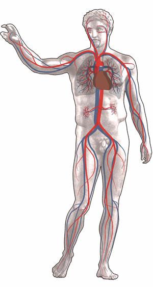 Kroppen er en fantastisk maskin. Den går og går, helt til det sier stopp.
