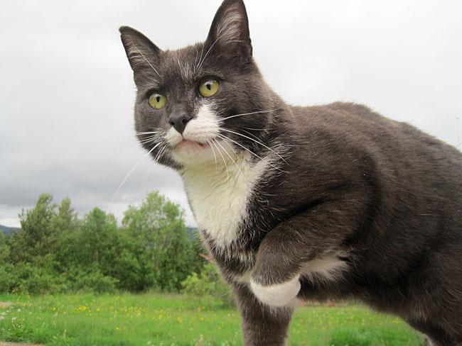 En katt er en katt - det har aldri vært meningen at vi mennesker skal forstå kattesjelens mysterier.