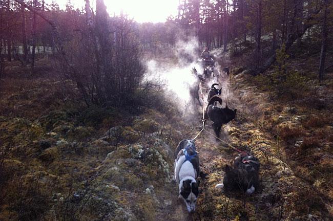 Frostrøyken driver fra de 14 hundene til Jo Are Brennodden mens vi kjører langs en myrlendt skogsveg helt i østendene av Grimsmoen naturreservat.