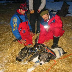Uvanlig mange slet med ekstrem diaré på hundene og måtte bryte løpet. Trond Ørslien var en av dem som måtte bryte etter å ha konferert med løpsveterinær Steinar Dagestad..