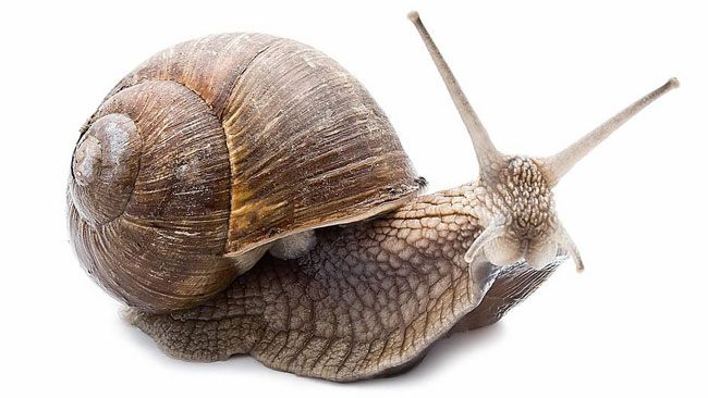 Sneglen beveger seg langsomt, og savner likevel ingenting.