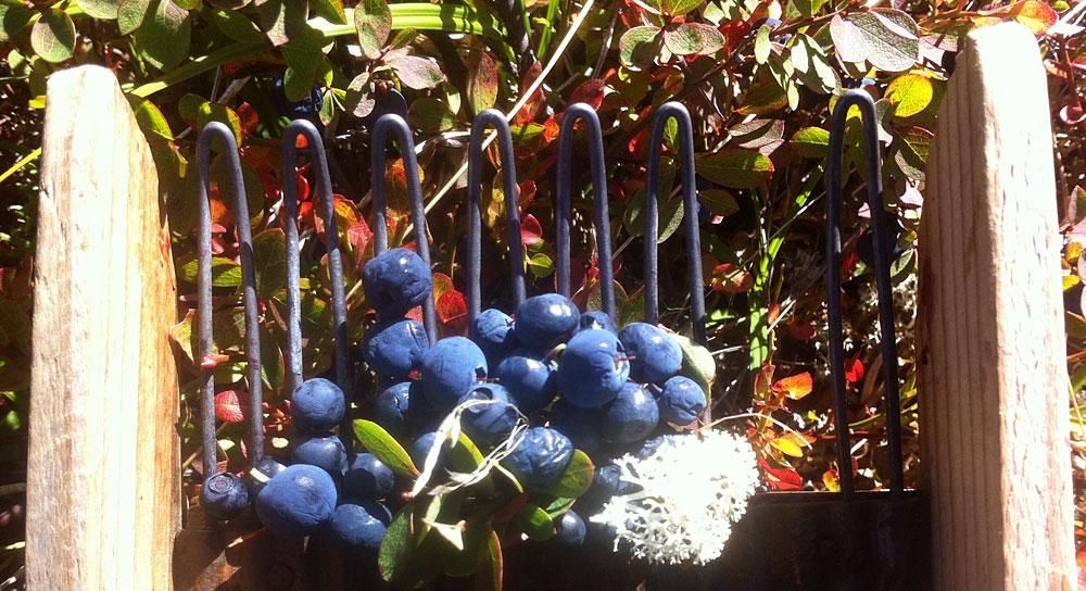Blåbærbakken