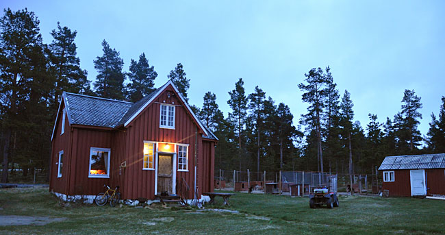 Høstferie med hundekjøring i Folldal?