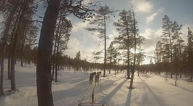 """Åpent skoglandskap i """"Lille Femundsmarka"""" i Folldal."""