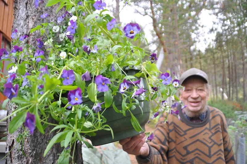 Blomster: Ei krukke med stemorsblomster er en av mange vekster som pryder tomta rundt huset. Ola Ståland bruker atskillige kroner og timer hvert eneste år på å plante og stelle mange blomster- og treslag.