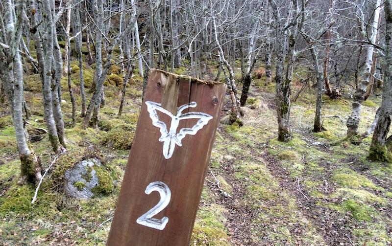 Turstiene på Veøya er merket med et sommerfuglsymbol.